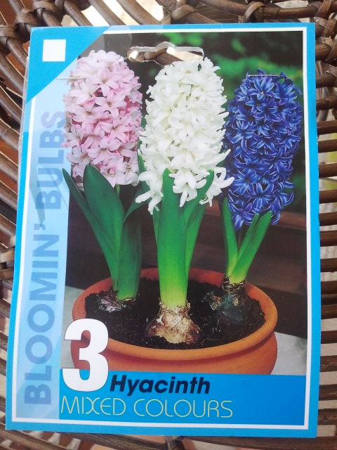 Mixed Hyacinths. I can't wait to see these beauties bursting out of thier bulbs.