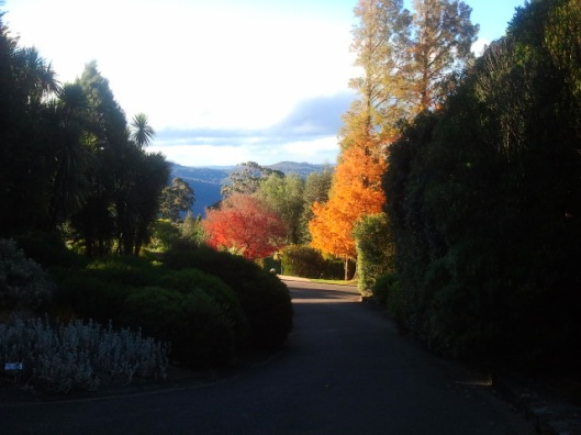 Firery colours of deciduous trees at Mount Tomah Botanic Gardens.