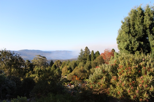 The Blue Mountains from Mt Tomah Botanic Gardens