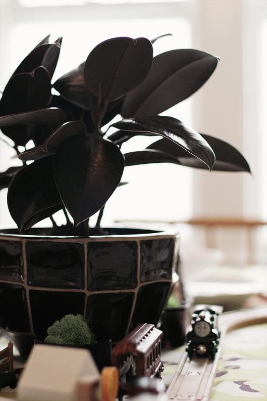 Black Foliage / Black Pot / Black Indoors