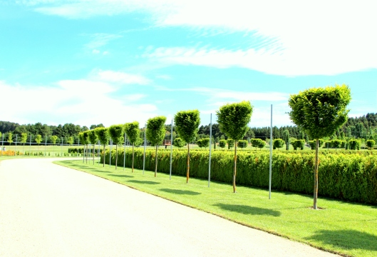 Behind The Pleached Hedge - The Parterre. No Entry!