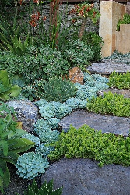 Succulents have fleshy, moist leaves, they wont catch alight easily.