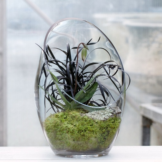 Terrarium with black Mondo Grass
