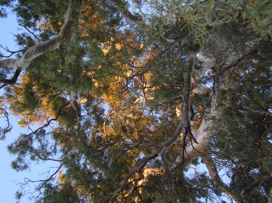 Sunshine in the canopy