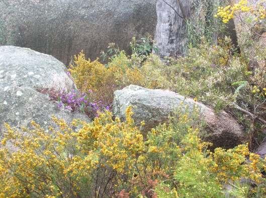 Australian Bush - Girraween National Park, QLD
