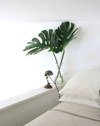 Monstera stems, two is perfect