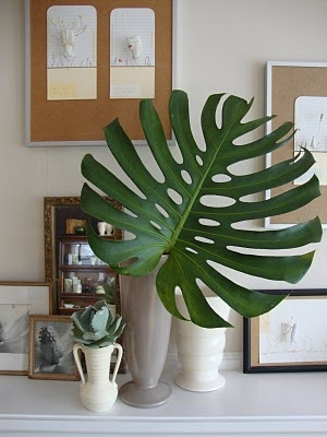 Monstera leaf - perfection!