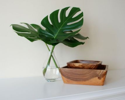 Monstera, keeping it simple
