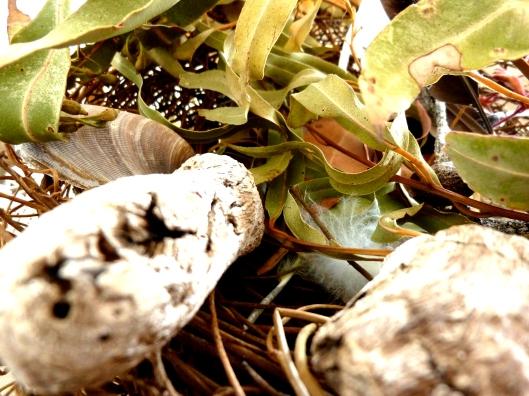 Nest Foliage