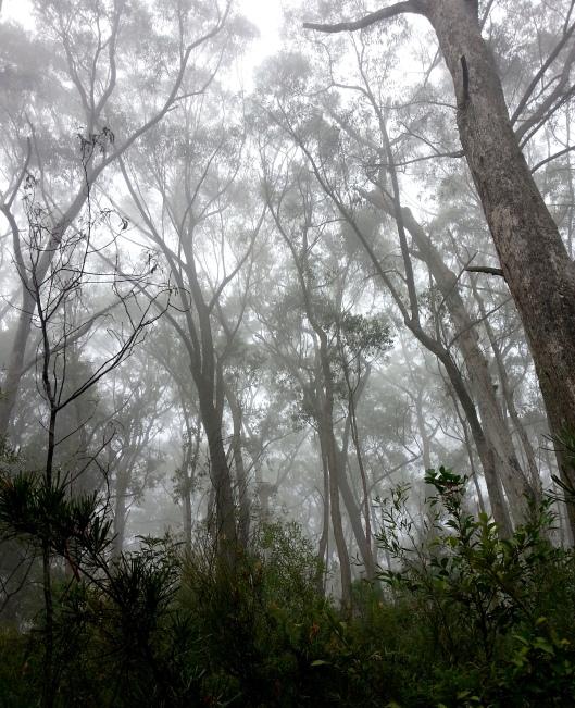 Misty Bush