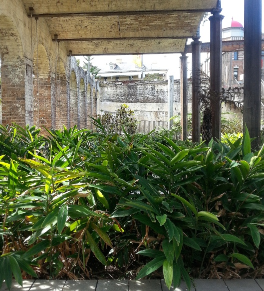 Paddington Reservoir Ginger