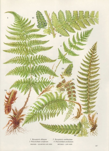 A display of various Fern leafs. Love greenery.